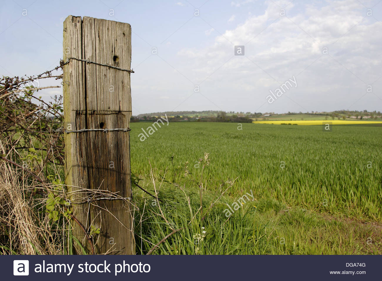 old-wooden-fence-post-in-field-close-up-england-uk-DGA74G.jpg